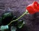Cvijeće za majku