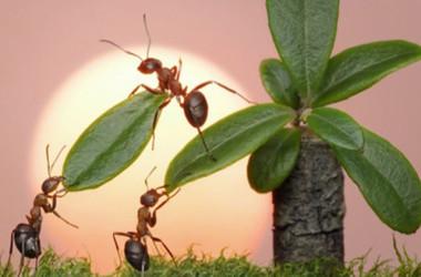 Životna filozofija mrava: Cijene slogu i ne sumnjaju u sebe