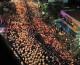 FOTO: Više od 2 milijuna ljudi u povorci slijedi Tijelo Kristovo!