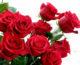 Ruže za put u vječnost