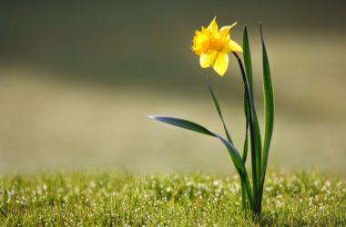 Mali žuti cvijet