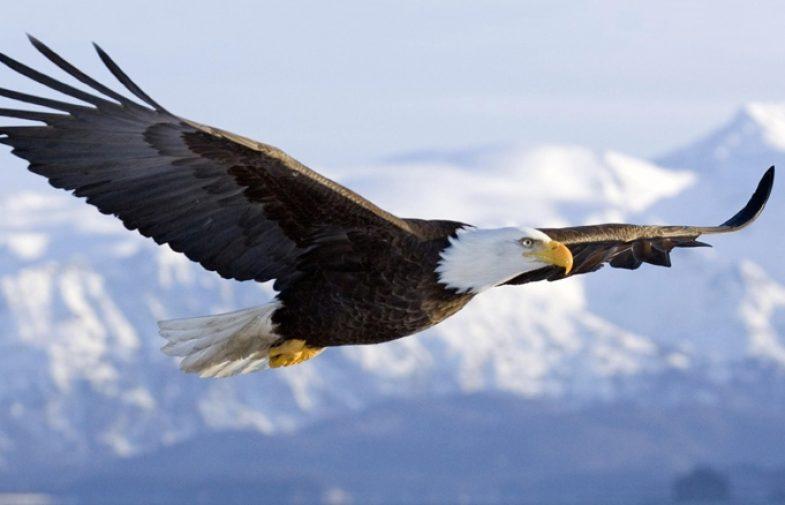 Čemu služe krila?