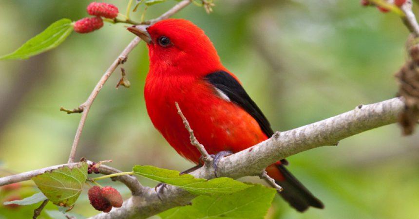 Zašto je ptica tužna?