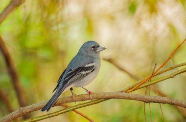Biti kao ptica – primjer iz kojega možemo mnogo naučiti!