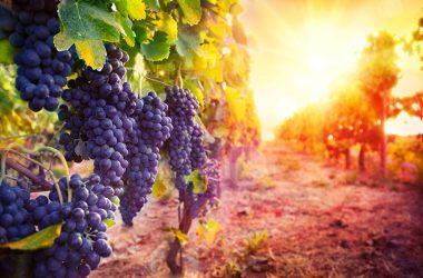 Snaga Boga je u ljubavi istine i vjernom služenju istini pa i pod cijenu života!
